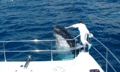Amazing Whale Growler 950 VT Power Catamaran - SDI - Schionning Designs International